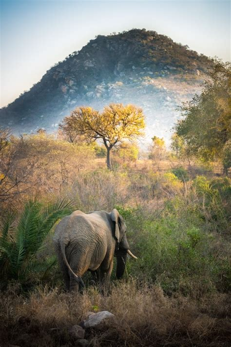 KRUGER NATIONAL PARK (South Africa) - Contact Phone, Address