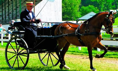 5 Fun Facts About The Morgan Horse - COWGIRL Magazine