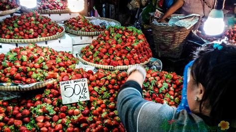 When Buying Strawberries (An Experience) |Baguio City