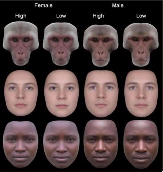 Symmetry Is Related to Sexual Dimorphism in Faces: Data