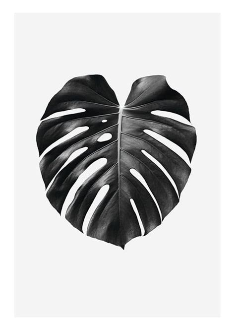 Black and white posters   Botanical prints for fashionable