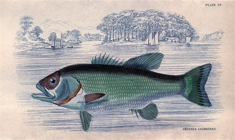 Instant Art - Glorious Fish - Lodge Style - The Graphics Fairy
